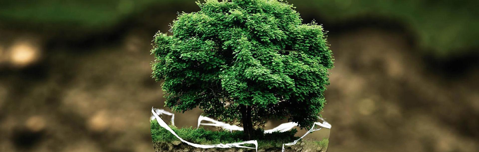 banner baum umweltschutz